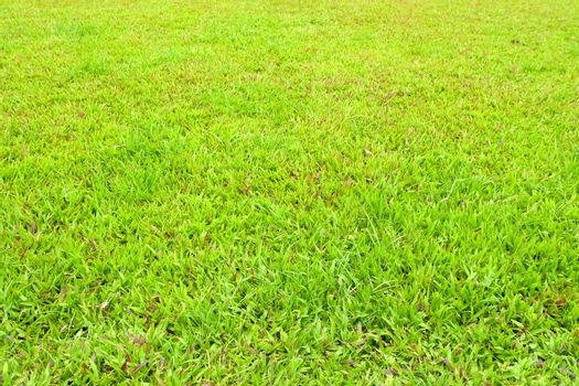 Grass Field Background.