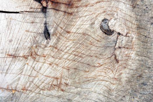 Wood Cutting Background.