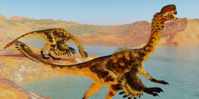 Citipati was a feathered velociraptor dinosaur that lived in the Cretaceous Period of Mongolia.