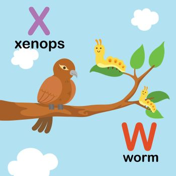 Alphabet Letter W-worm,X-xenops,illustration