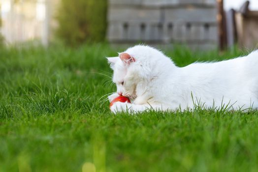 The cat plays with the red egg in a grass.