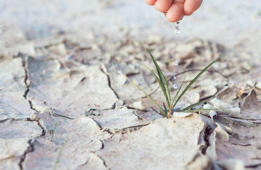 Woman watering  seedlings are growing from arid soil with mornin