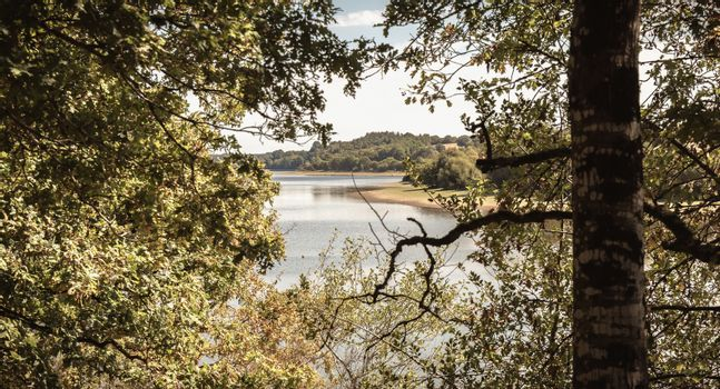 view of the Jaunay lake in Vendee France a summer day