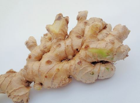 Bitter ginger with white background. Bitter ginger also called Zingiber zerumbet, awapuhi, shampoo ginger, lempuyang and pinecone ginger. Used as food flavoring and appetizers in various cuisines food