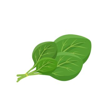 Spinach leaves cartoon vector illustration. Leafy green vegetable flat color object. Source of nutrients and antioxidants. Culinary ingredient. Healthy food product isolated on white background