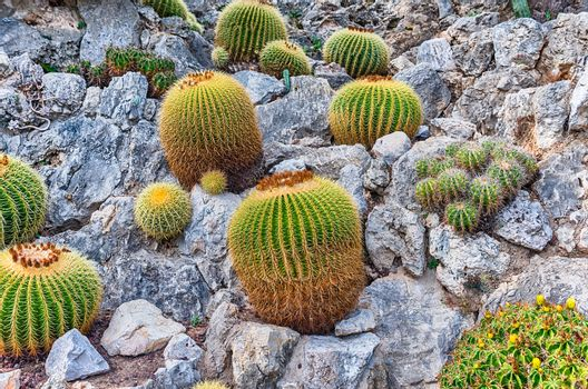 Cultivation of cactus and other succulent plants inside a botanical garden