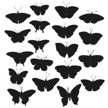 Insects realistic butterfly isolated on white background vector illustration