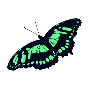 Insects realistic colored butterfly isolated on white background vector illustration
