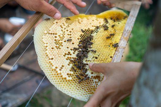 Bee colony full of honey high nutrient and vitamin transfer to beekepping handmade box.