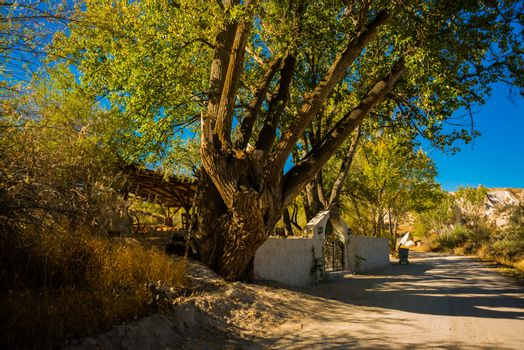 Goreme region, Cappadocia, Anatolia, Turkey: The road leads to the rocks, near the tree and the fence in summer in Sunny weather.
