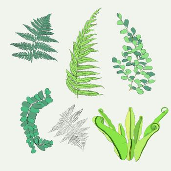 Hand drawn Botanical  collection of fern leaves. Vector design elements isolated on white background.
