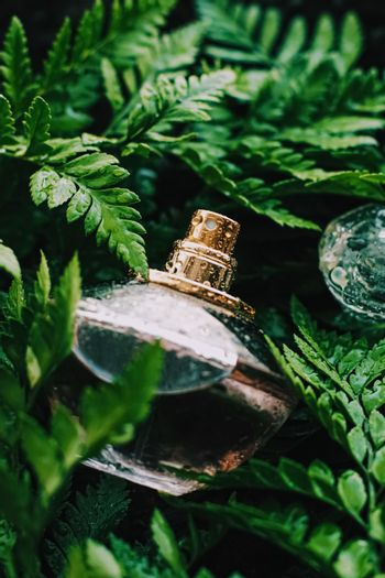 Perfume bottle with aromatic tropical scent in nature, luxury fragrance