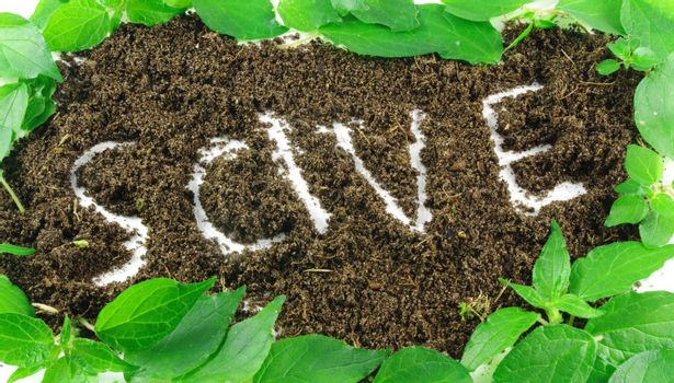 word save written on soil with leaves