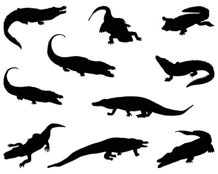 Black silhouettes of crocodiles on a white background