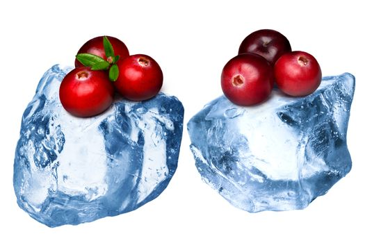 Wild cranberries freezing on rough crushed ice. Clipping paths, large depth of field