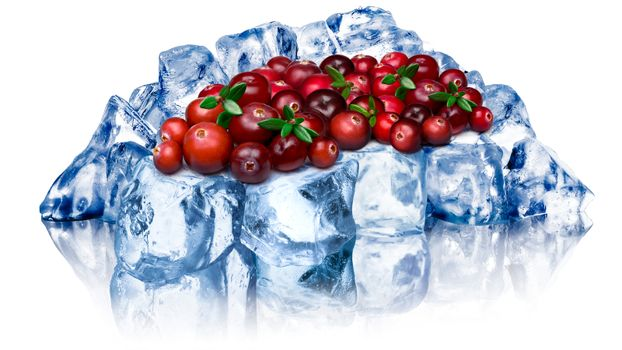 Heap of wild cranberries freezing on rough crushed ice. Clipping path, large depth of field