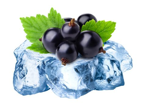 Heap of black currants freezing on rough crushed ice. Clipping paths for both isolated blackcurrants and whole composite,  large depth of field