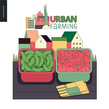Urban farming and gardening - cucumbers and tomatos