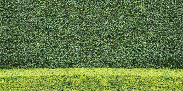 Two tone Natural green leaf wall and Texture background