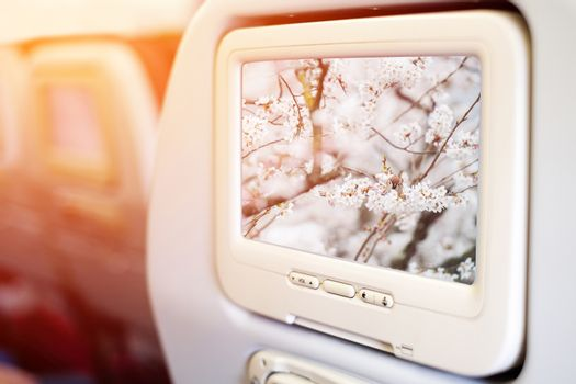 Aircraft monitor in front of passenger seat showing Little bird in sakura, Kyoto, Japan