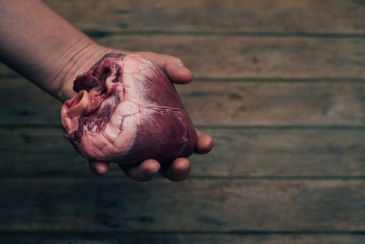 Heart (pig heart) in hand for cardiology concept