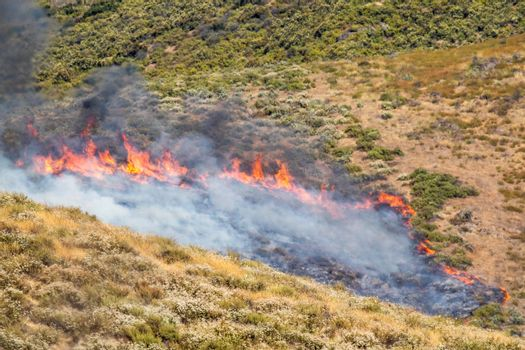 Dry Brush Wild Fire Spreading Quickly.