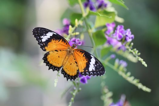 Butterfly fly in morning nature