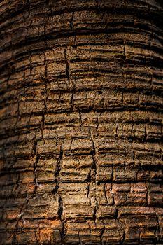 Old wood tree cracked texture