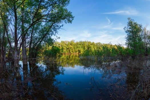 Wild forest and lake in a beautiful day