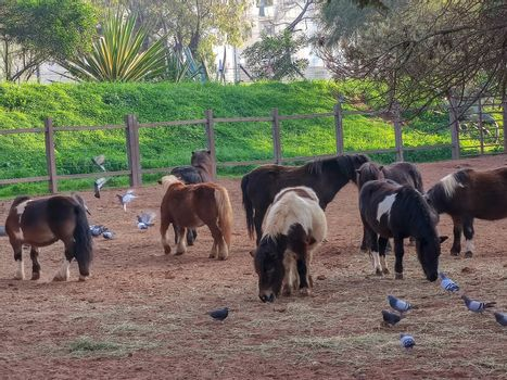 a group of small horses in the stable
