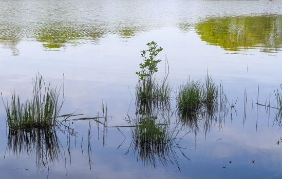 Beautiful landscape at the coast of a lake with a reflective wat