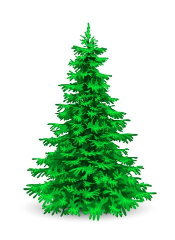 Christmas tree. Herringbone on a white background. Evergreen coniferous tree.