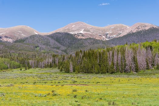 Meadow in The Laramie Mountains in Spring - The Scenic Beauty of Colorado