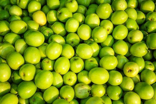 Jujube, Indian jujube, Chinese date, monkey apple, green balls pile in daylight