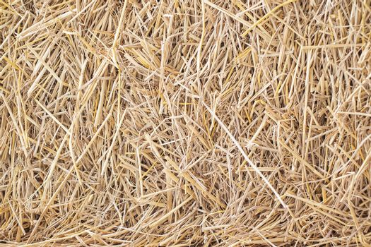 Dry straw Background or Texture