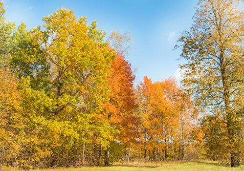 Autumn trees against the sky in a forest or Park.