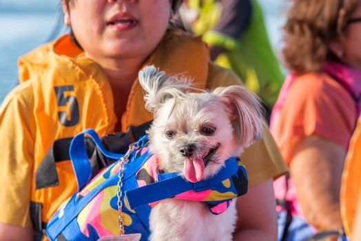Asian woman and dog so cute mixed breed with Shih-Tzu, Pomeranian and Poodle sailing on Songkaria river by long tail boat with sun light in evening time when vacation travel for relax
