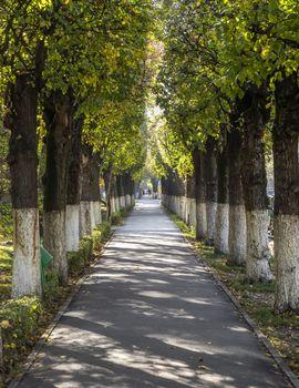 Pedestrian street in the autumn city park, Almaty, Kazakhstan.
