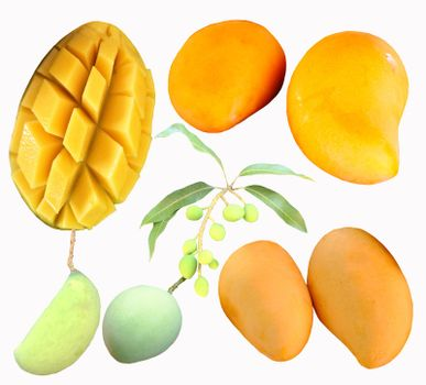 Set of ripe delicious mangoes yellow and green on white background.