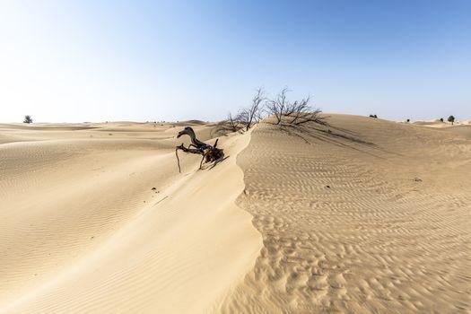 Dead Tree eaten by desert, Desert of Sand Dunes, Dubai, United Arab Emirates, UAE, Middle East
