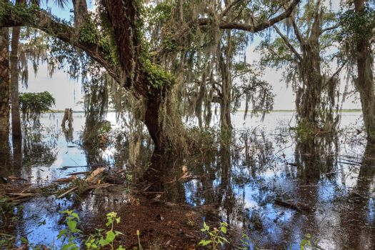 Seasonal flooded swamp of Myakka River State Park in Sarasota, Florida.