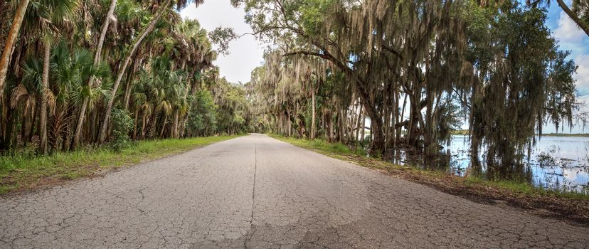 Spanish  moss hangs from trees that line the road in Seasonal flooded swamp of Myakka River State Park in Sarasota, Florida.