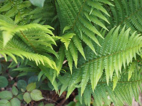 fern plant leaves background