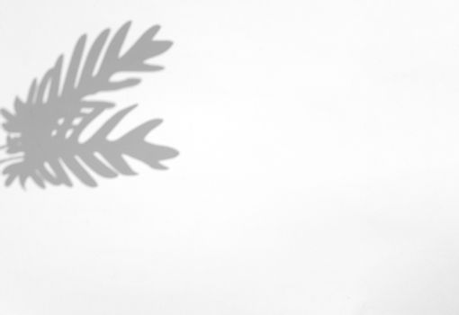 Palm leaves natural shadow overlay on white texture background, for overlay on product presentation, backdrop and mockup