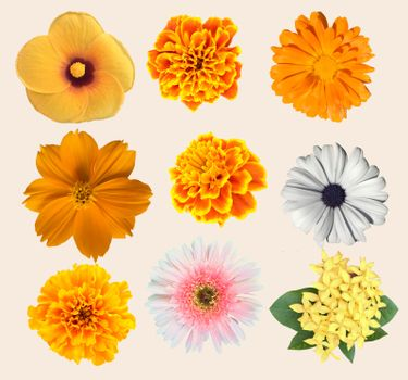 Set of beautiful Various Flowers collection isolated on white background.