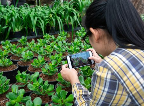 Farmer photographing seedling plants in greenhouse, using mobile phone. Technology with agriculture concept.