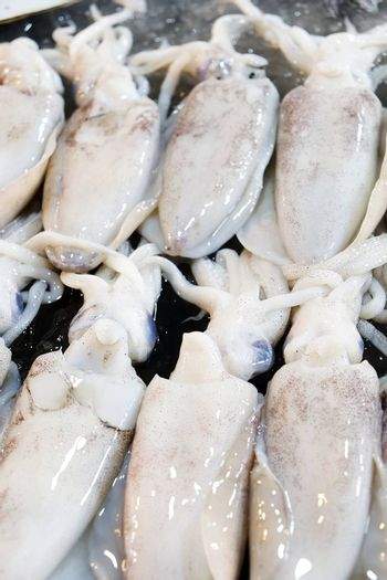 Fresh Squid in The Local Market