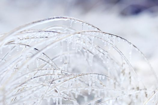 Grass covered with ice