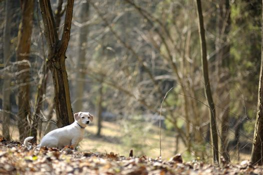 A dog in a spring forest
