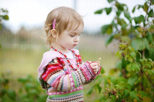 Adorable toddler girl picking raspberries